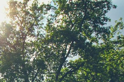 London Stree Trees copy 1024x307